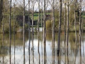 Prés inondés à Sens sur Seille